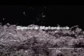 Pakshi x video